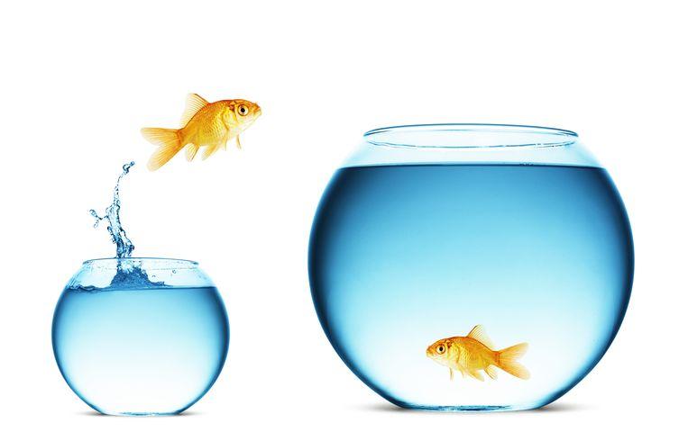 'Als vis weet je vermoedelijk niet dat er water is, je ervaart het als de ruimte waarin je nu eenmaal leeft.' Beeld rv