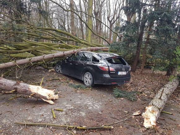 Een boom verpletterde bij de Meerlenhoflaan in Hoboken een auto.