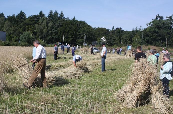 Op de oogstdag in Wapenveld slaan maaiers met een zig, een zeis, in de rogge.