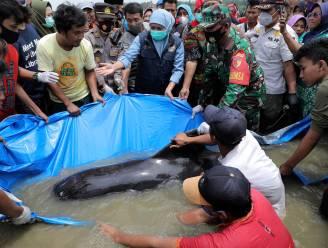 Meer dan veertig grienden spoelen aan op Indonesisch eiland en sterven