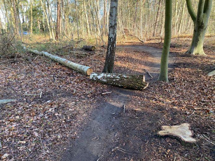 Een dikke boomstronk blokkeert het atb-parcours.