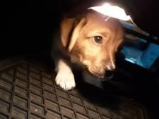 Brandweer redt puppy uit brandend huis in Helmond