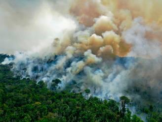 Twaalf procent meer tropisch regenwoud vernield in 2020