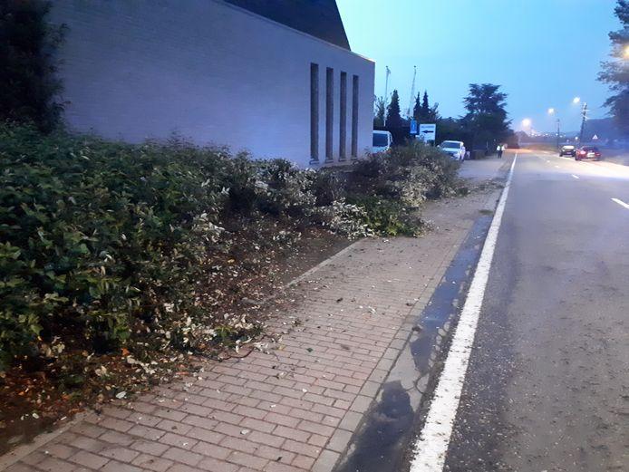 De wagen scheerde een haag aan de overkant van de straat.
