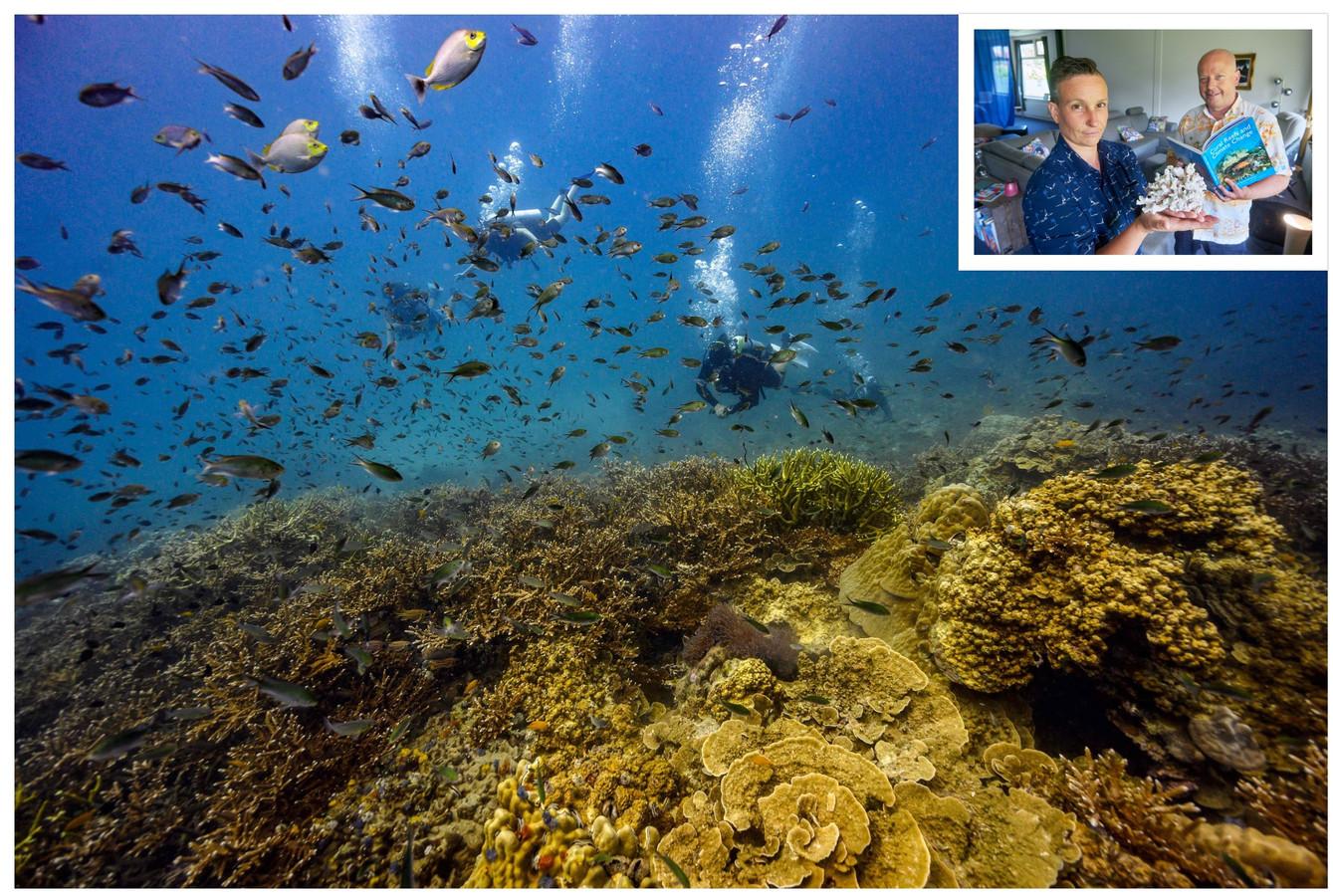 Het koraal nabij Koh Tao. (foto Lilian Suwanrumpha/AFP). Inzet: Frank en Vera (foto Jeroen Appels/Van Assendelft).