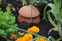 Fraaf een olla in, een terracotta kruik die het water langzaam afgeeft.