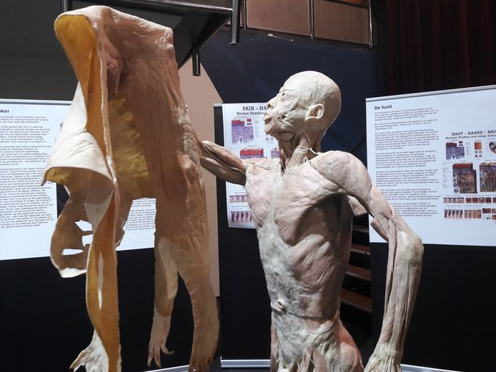 Expo Real Human Bodies