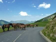 Paarden veroorzaken file op noordelijke ringweg Groningen