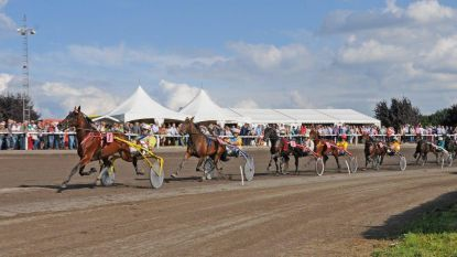 Hippodroom wordt mekka van paardensport