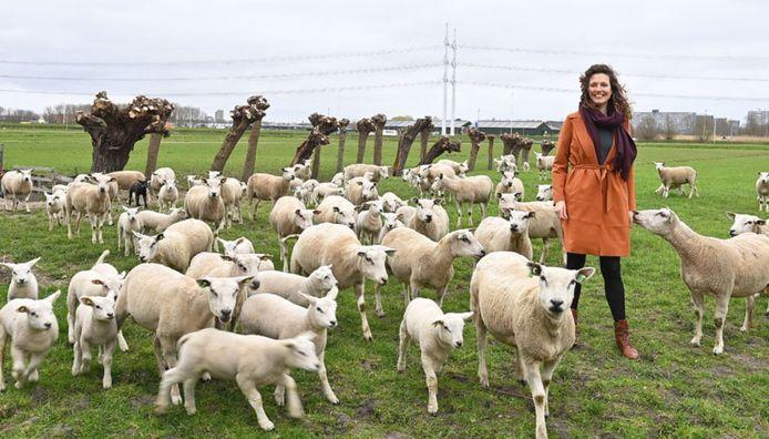 95 procent van de schapenwol wordt niet gebruikt.