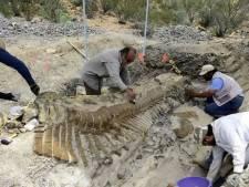 Une nouvelle espèce de dinosaure identifiée au Mexique
