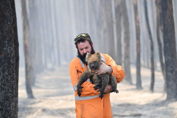 Un secouriste tenant un koala à Cape Borda, sur l'île Kangourou, dans le sud de l'Australie.