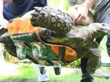 Une tortue allemande de 100 kilos redevient mobile grâce à un skateboard