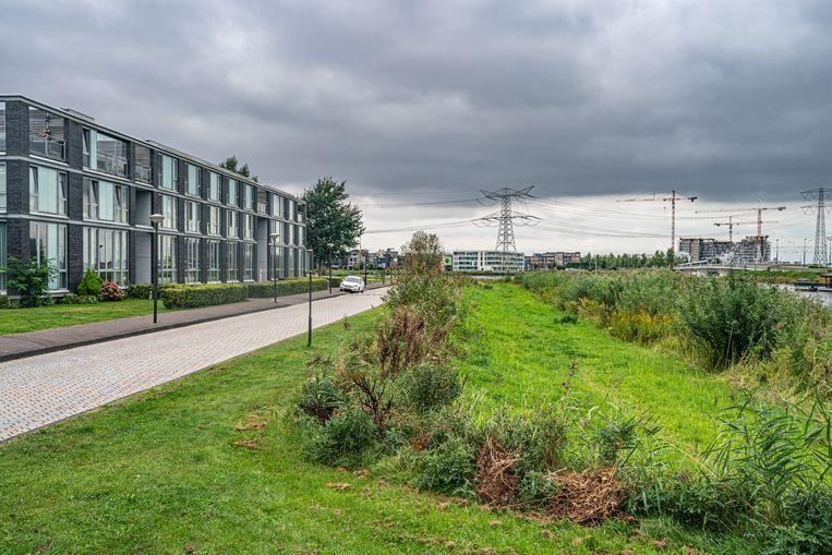 De groenstrook langs de Oeverzeggestraat op IJburg. Als het aan de gemeente ligt, komen hier negentig parkeerplaatsen voor bezoekers van het nabijgelegen sportcomplex in het Diemerpark. Beeld Joris van Gennip