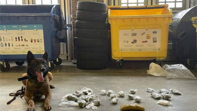 Drugshond treft grote hoeveelheid cocaïne en marihuana aan in parking in Matongewijk