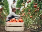 'Roosendaal aantrekkelijk en veilig maken voor arbeidsmigranten'