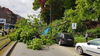 Boom valt op rijdende wagen: inzittenden komen met de schrik vrij