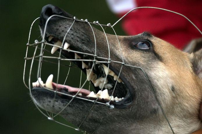 Foto ter illustratie: een hond met een muilkorf.