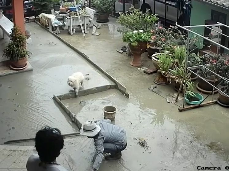 Deze hond vernielt nieuw gegoten betonnen vloer
