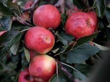 Bloesems en vruchten van streek door kou: 'Het duurt te lang voordat de grond is opgewarmd'