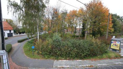 Buurtbewoners halen slag thuis in beroep: stad moet bomen aan Pottelberg snoeien (maar mag van rechter zelf kiezen wanneer)