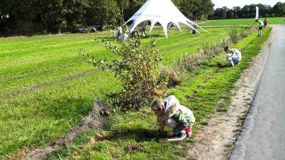 Leerlingen De Regenboog planten witte krokussen langs Dodendraad
