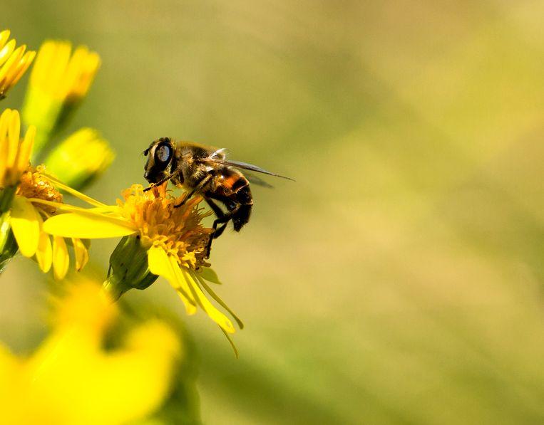Bee bij bijen bees Beeld Shutterstock