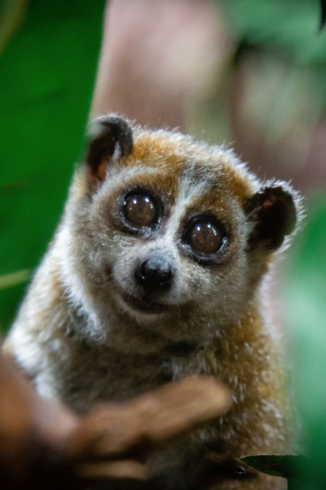 Wat dit schattige diertje ons kan leren over groepsstress