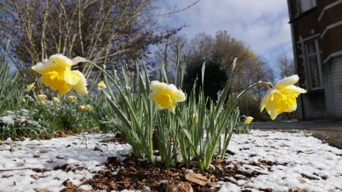 Vandaag opnieuw wisselvallig en koud, laatste sneeuwzone trekt over het land