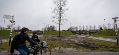 Linde voor 100 jaar Veldhoven geplaatst