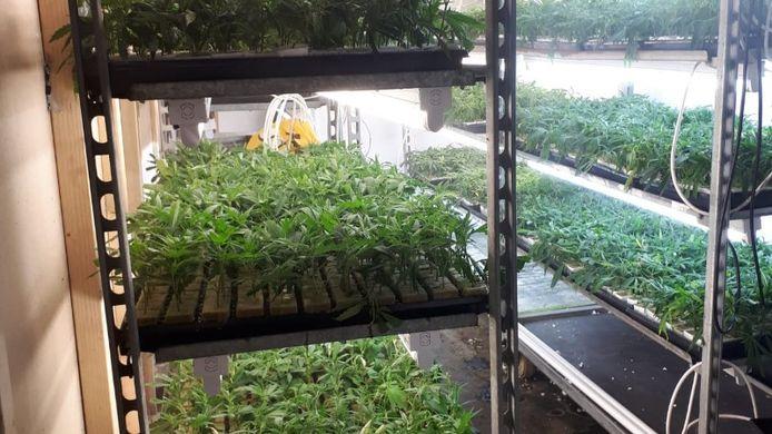 Een deel van de planten die de politie aantrof.