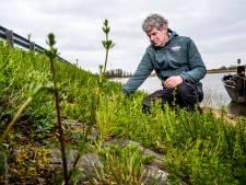 Waarom de bloemetjes en de bijtjes volgens Peter van levensbelang zijn (en wat jíj kan doen)