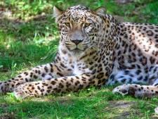 Spoorpark is vol, safaripark helemaal leeg: 'Cruciaal om in mei open te zijn'