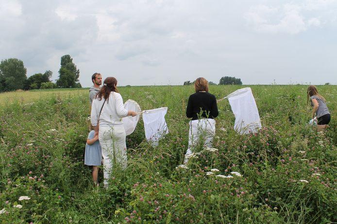 Tijdens een vangactie in een bloemenweide in Ressegem werden heel wat soorten (wilde) bijen ontdekt.