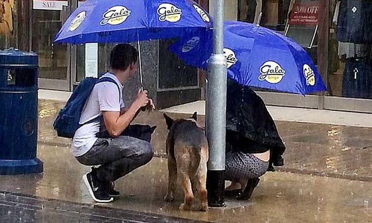 Hartverwarmend: stel beschermt achtergelaten hond in de regen