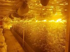Politie pakt Aerdtenaar met 1.600 wietplanten in schuur