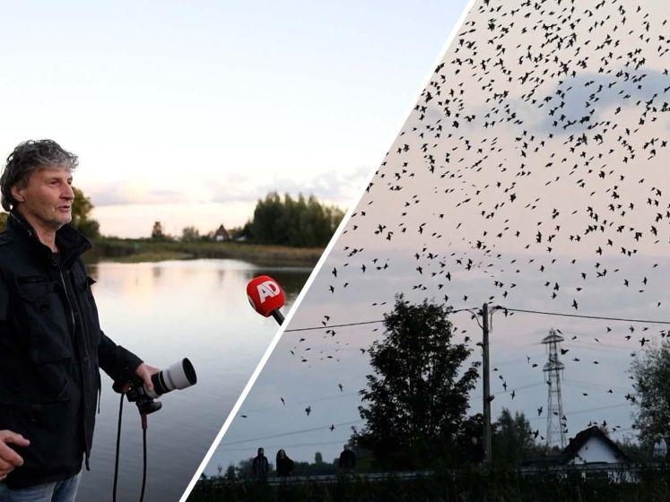 Prachtige beelden: spreeuwen geven indrukwekkende luchtshow boven Gouda