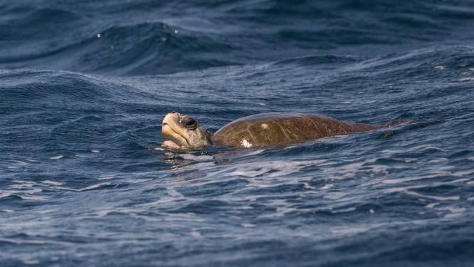 19 doden na voedselvergiftiging door zeeschildpad in Madagaskar