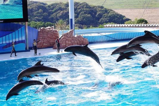 De dolfijnenshow in Adventure World Shirahama.