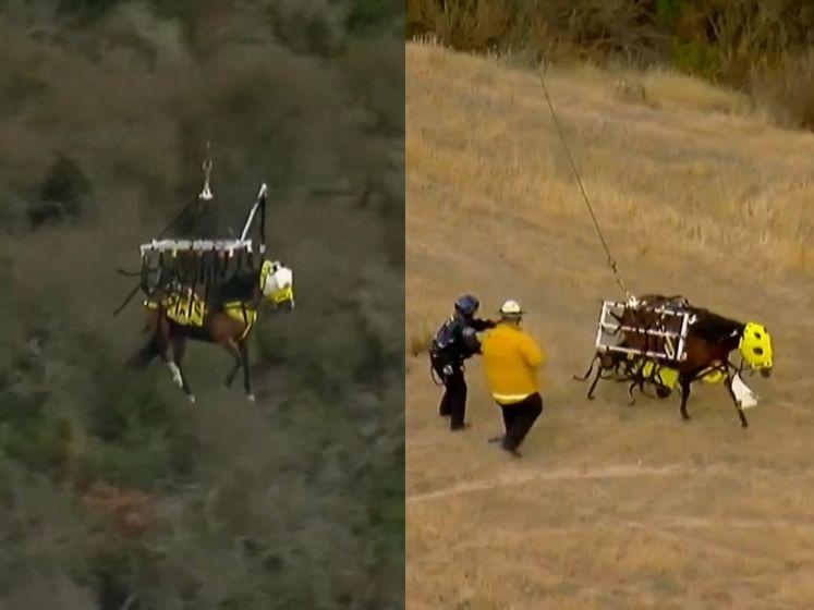 Paard aan helikopter breekt los tijdens spectaculaire reddingsoperatie