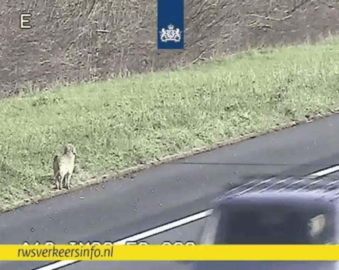 Hond langs A12 bij De Meern.