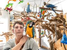 Jolanda droomt nog elke nacht van haar verdwenen kaketoe Roza