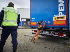 Pool (33) opgepakt voor mensensmokkel in Hoek van Holland