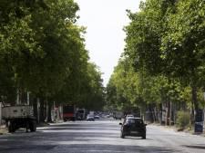 Un millier d'arbres plantés le long des routes bruxelloises