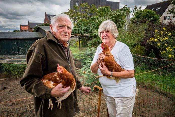 Jaap en Alie Schoonman met twee van hun vier getraumatiseerde kippen. Normaliter kun je ze gemakkelijk oppakken. Nadat ze waarschijnlijk zijn bekogeld met kalkeieren niet meer.