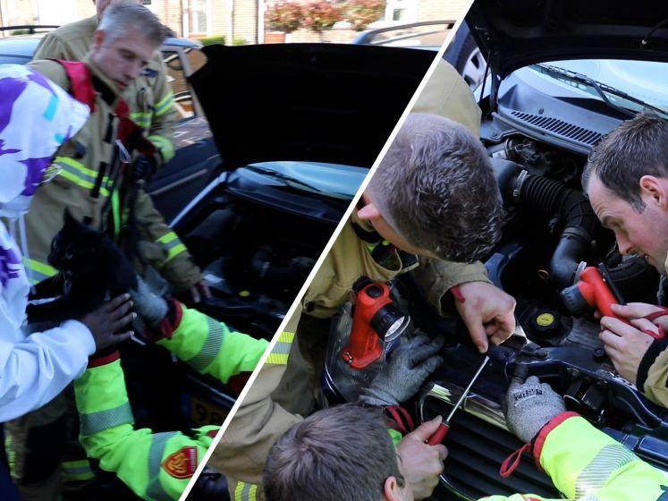 Brandweer redt kitten uit motorblok van auto, baasje is 'heel blij'!