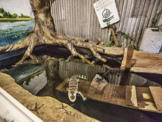 Nederlander houdt alligator uit Deense zoo als huisdier