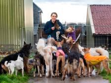Arnhemse Paddy zoekt een nieuw huis, ook voor haar twintig honden en zeventien katten