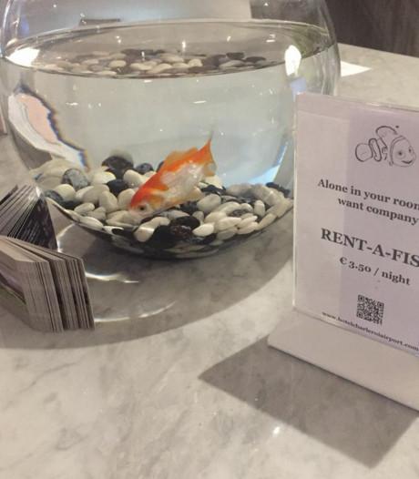 Hotel verhuurt goudvis aan eenzame gasten