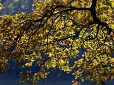 Eerste micro-bos in Apeldoorn komt in Zevenhuizen